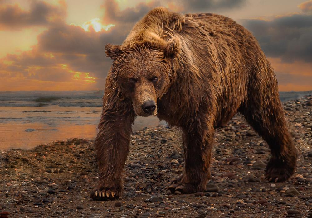 Bear-IMG_6916-Edit.jpg