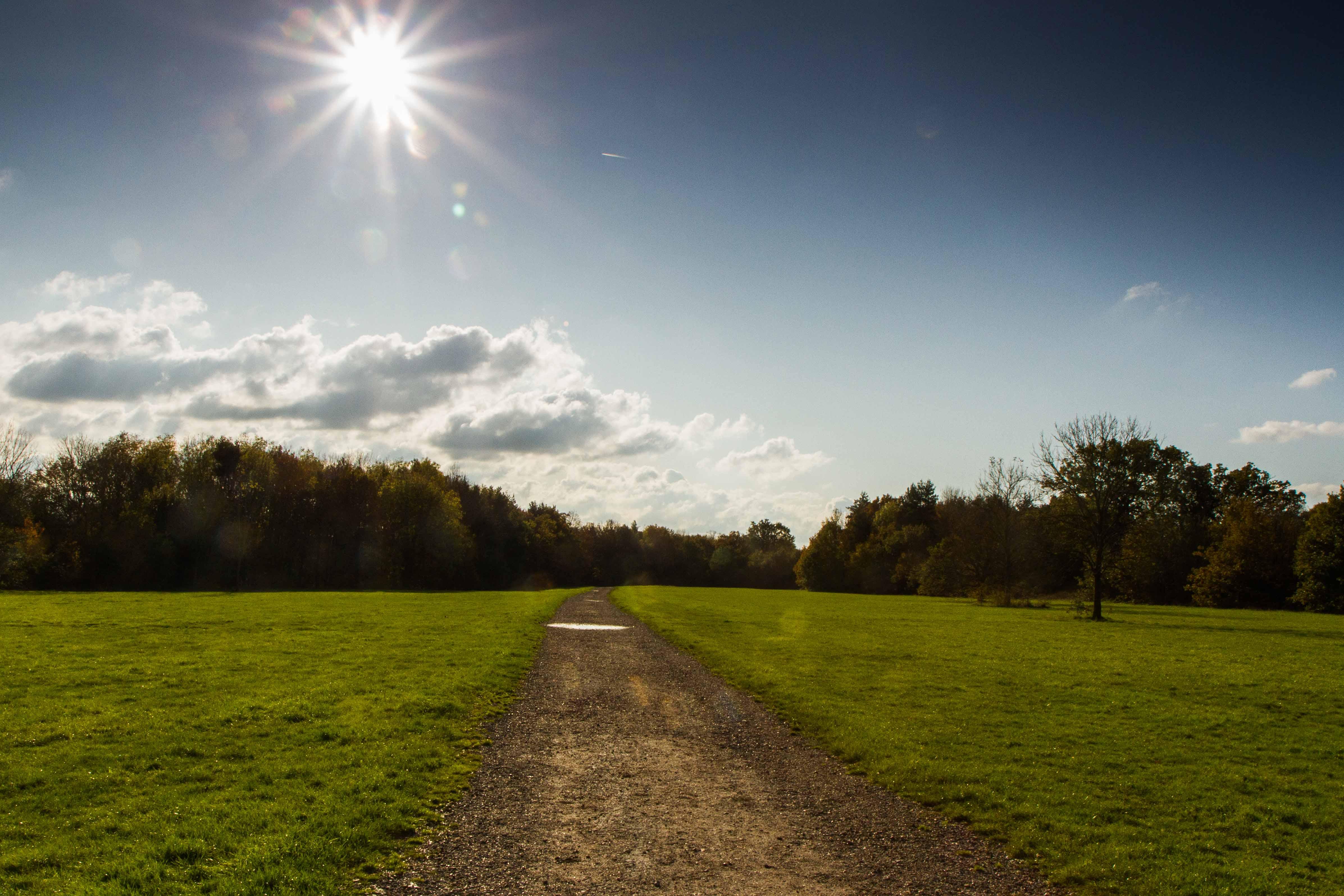 hylands path into sun-1.jpg